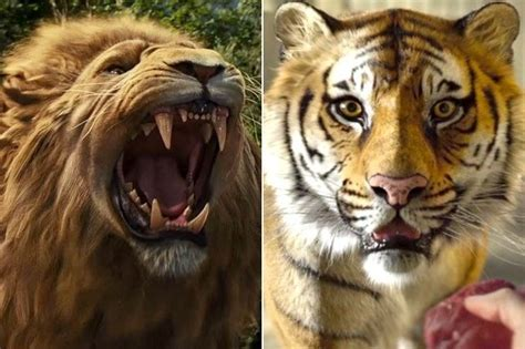 film lion vs tiger lions and tigers in movies 2013 oscars zimbio