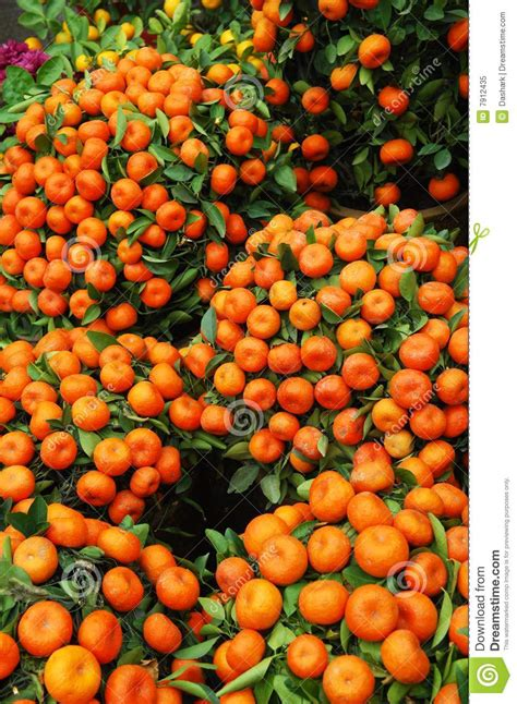 new year tangerine significance tangerines royalty free stock photo image 7912435