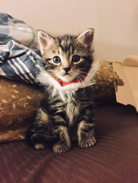 Cinta Untuk Anak Kucing anak kucing ini suka menyibuk ketika lelaki ini perlukan