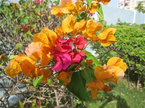 flower pics flowers flower pics from puerto rico pinterest