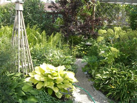 hosta and fern path in my garden pinterest