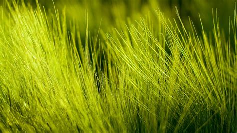 green grass wallpaper green grass wallpaper 14189