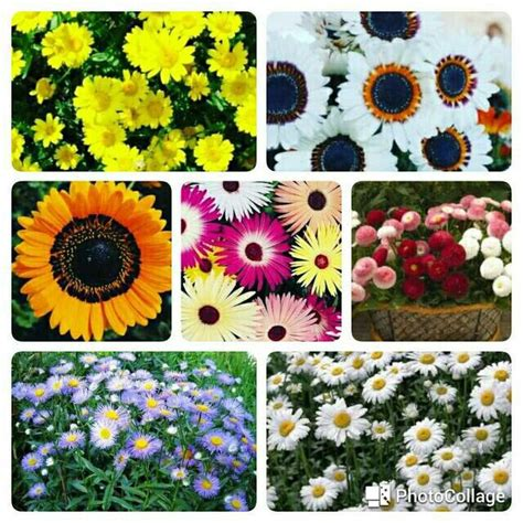 Paket Hemat Benihbibitseed Bunga Cosmospoppymarigold Isi 7 Jenis 810 best flower images on flower flowers and flower beds