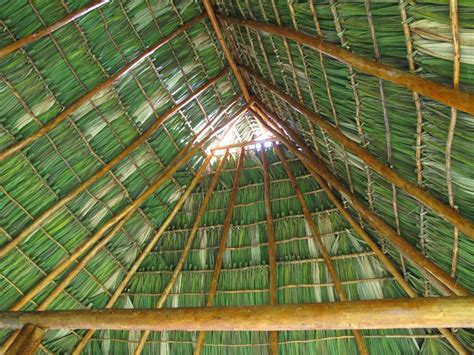 Palm Thatch Roof Building In Nicaragua Palm Fronds For The Thatch Roof