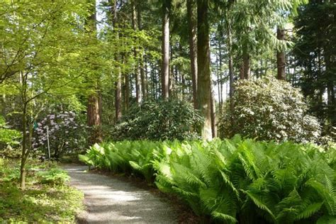 Rhododendron Species Botanical Garden Rhododendron Species Botanical Garden Picture Of Rhododendron Species Botanical Garden