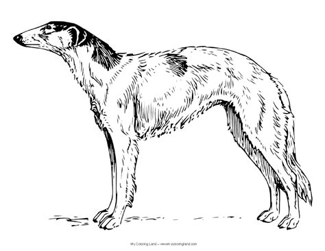 coloring pages of realistic dogs my coloring land
