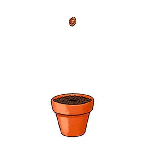 immagini di vasi immagini e gif animate di vasi da fiori gifmania