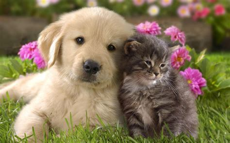 wallpaper cat and dog hd hd dogs wallpapers and photos hd animals wallpapers