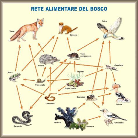 rete alimentare reti ecologiche