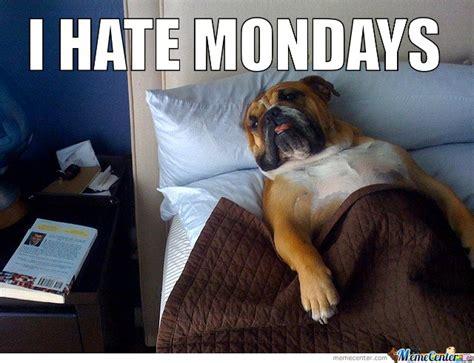 Monday Dog Meme - best funny monday memes we hate monday monday memes
