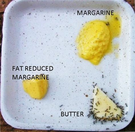 why butter is better than margarine butter is better
