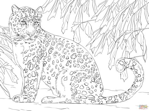 leopard color amur leopard coloring page free printable coloring pages