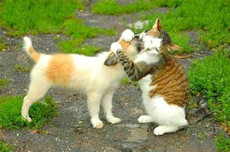 dogs don t like hugs no hugging of pets i say it depends steve dale pet world