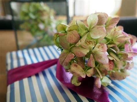 wie trockne ich hortensien hortensien trocknen wie trocknet hortensien richtig