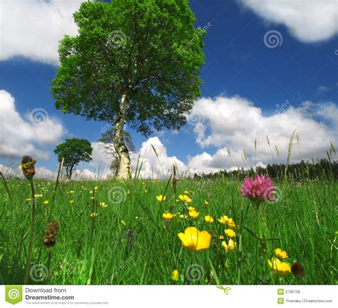 summer days and summer a sunny summer day stock image image of nature grass 2790739