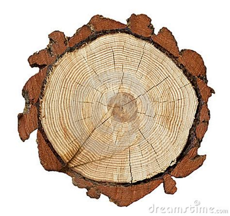 Tree Trunk Cross Section by Cross Section Of A Tree Trunk Royalty Free Stock Images Image 13212949
