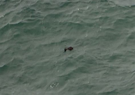 airasia lost and found six bodies found in indonesian waters where airasia plane