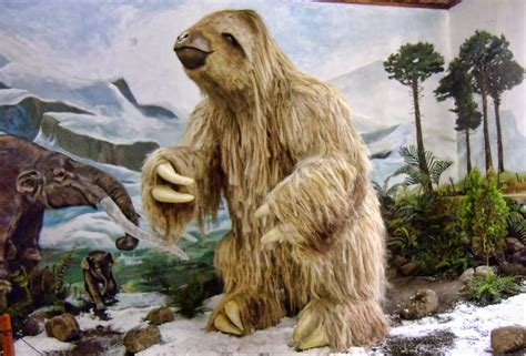 health advantages of micro organism in the giant giant sloth spotted in san ram 243 n the tico times costa