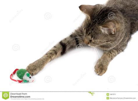 Cat Playing With Mouse Stock Image   Image: 1867071
