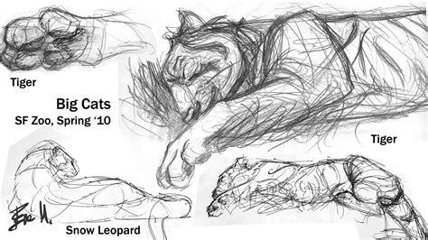 sketchbook big animal sketchbook big cats 02 by 89ravenclaw on deviantart
