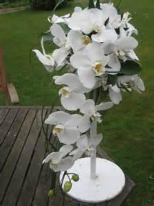 premium flowers wedding themes orchid