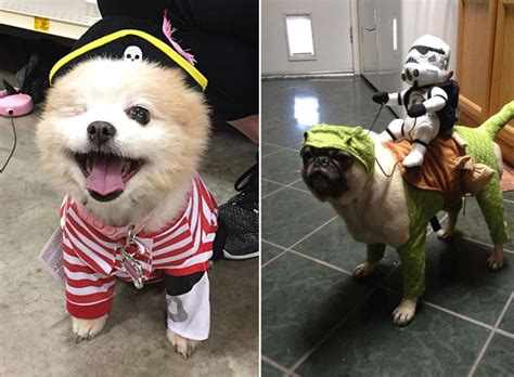 halloween themes with dogs dog halloween costume ideas 24 totally terrifying