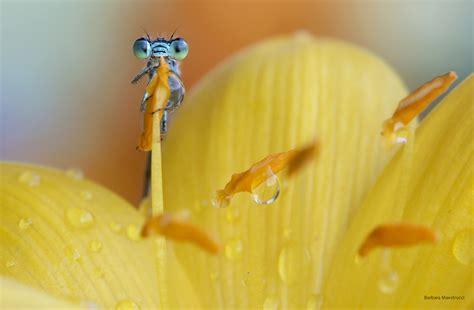 pistillo fiore piccolo come un pistillo di un fiore juzaphoto