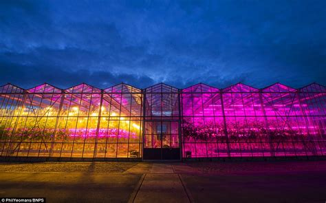 led grow lights  garden greenhouse