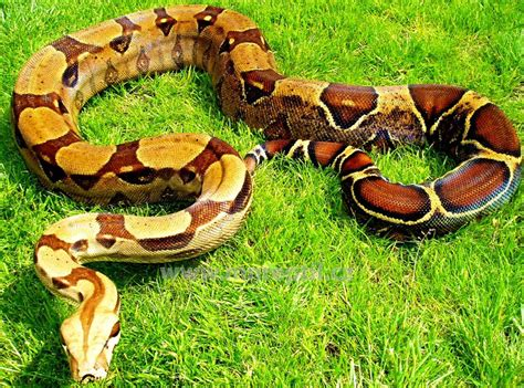 collection www mnreptil cz captive bred reptiles by