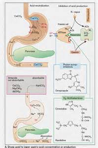 Proton Inhibitors Mechanism Of 09 Gastrointestinal Agents 1