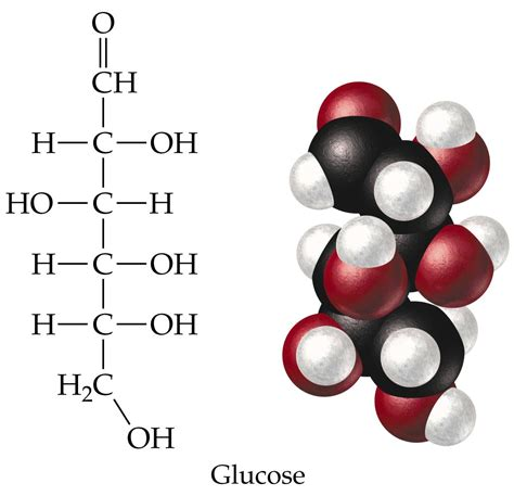 carbohydrates are what of molecules chapter 19 carbohydrates pictures