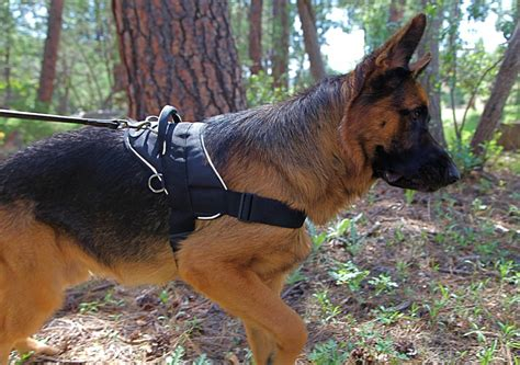 For Large Dogs best harness large dogs