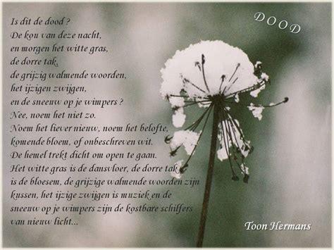 gedicht toon hermans bloem seniorennet de startpagina voor senioren de nieuwe 50