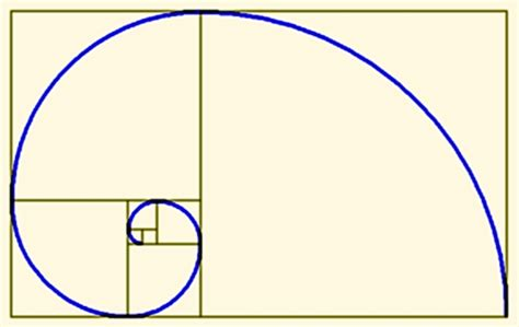 Golden Section Spiral by From Observation To Insight The Golden Ratio The
