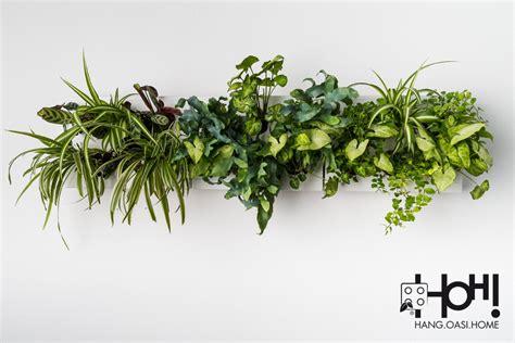 pannelli per giardini verticali pannelli per giardini verticali hoh smart trio