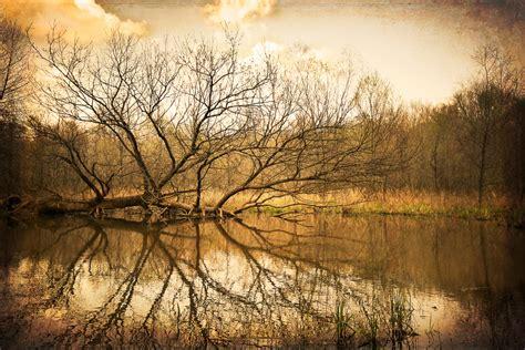 best selling photography fallen macinnis photography johns creek ga