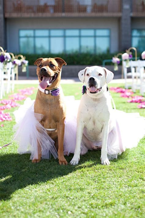 91 best images about Dogs in Weddings on Pinterest   Dog