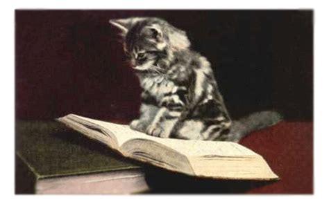 livres enfant chat chouette papillon dont anim 233 s