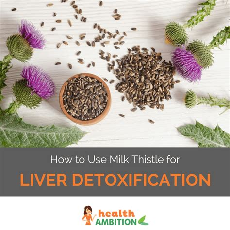 How To Take Milk Thistle For Liver Detox by How To Use Milk Thistle For Liver Detoxification