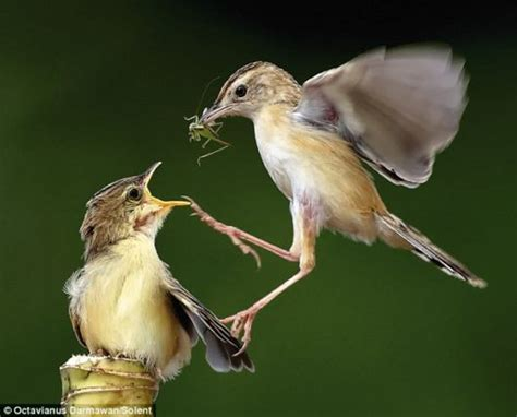 feeding time for small birds funzug com