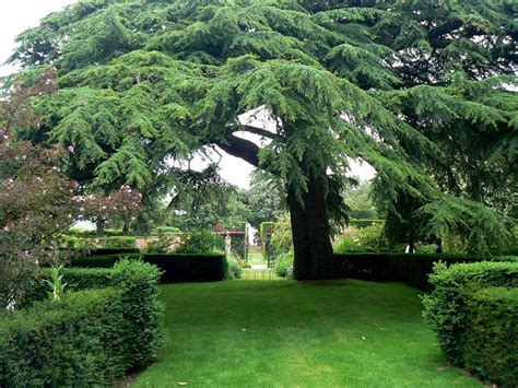 giardini meravigliosi meravigliosi giardini i giardini dell hidcote manor