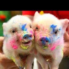 images  baby teacup pigs played  paint