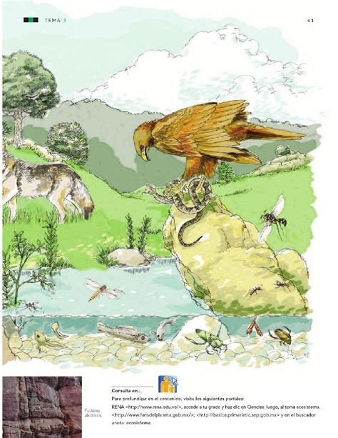 cadena trofica norte de chile estabilidad del ecosistema y acciones para su