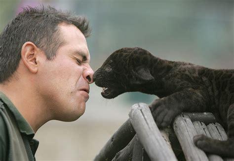 what do you call a baby jaguar baby black jaguar cuteness blogissues