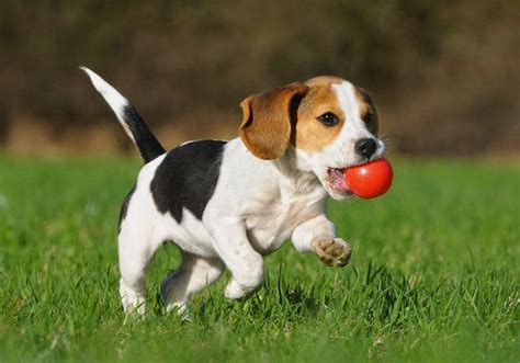 safe puppy toys choose safe toys and for your small the dogs