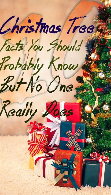no christmas tree this year 10 tree facts you should probably but no one really does amongraf