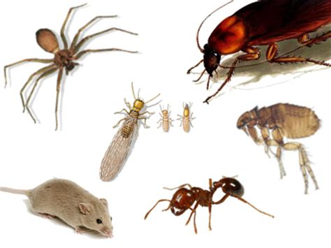 house pest san antonio bugs more roaches spiders and ants expected