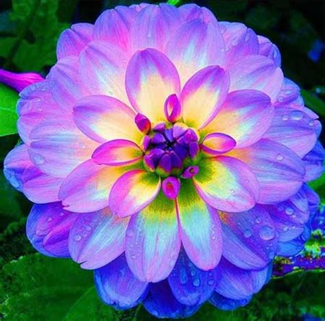 imagenes de flores lindas 187 flower photgraphy collections of gif animated and