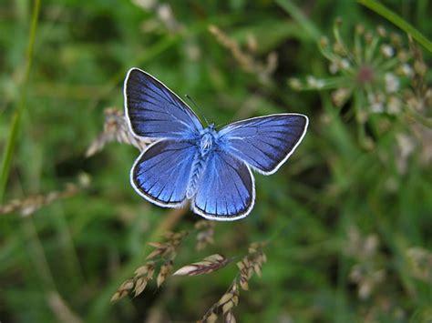 imagenes flores mariposas mariposas bonitas auto design tech