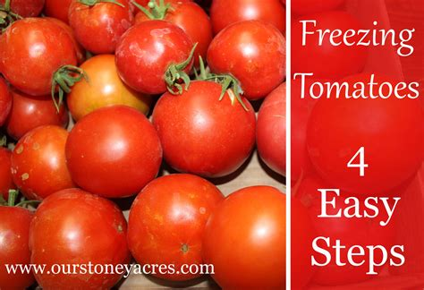 Freezing Tomatoes From The Garden by Freezing Tomatoes 4 Easy Steps Stoney Acres